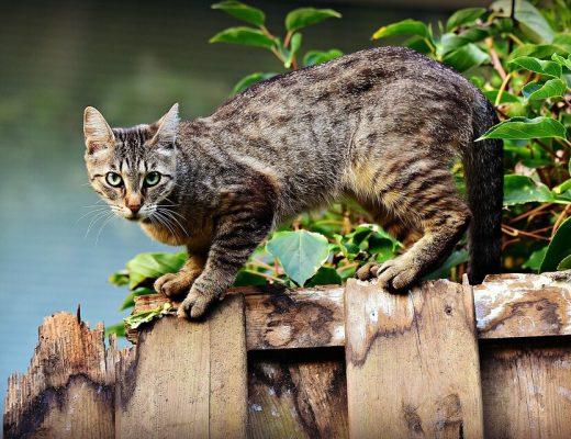 7 tips om katten uit je tuin te weren-min